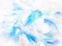 Plumes Photographie stock