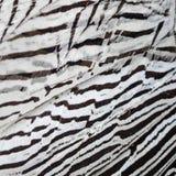 Plumes argentées de faisan Photos libres de droits