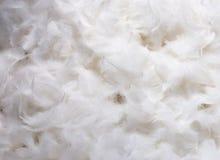 Plumes blanches Photos libres de droits