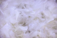 Plumes blanches de fond Photographie stock