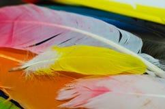Plumes colorées lumineuses, oiseau de coloré Photographie stock libre de droits