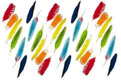 Plumes colorées sur le fond blanc Images stock