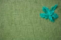 Plumes d'oiseau colorées sur un fond de tissu Photographie stock libre de droits