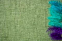 Plumes d'oiseau colorées sur un fond de tissu Photos stock