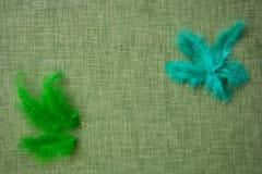 Plumes d'oiseau colorées sur un fond de tissu Photos libres de droits