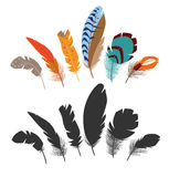Plumes d'oiseau multicolores Image stock