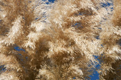 Plumes Stock Images