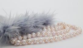 Plumes de brin rose de perle et de gris bleu sur le backg blanc Images libres de droits
