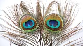 Plumes de paon ou de paonne Photos libres de droits