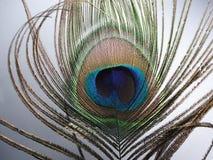 Plumes de paon ou de Peafowl Photographie stock