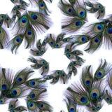 Plumes de paon sur le fond blanc Fond sans couture Un collage des plumes Employez les matériaux imprimés, signes, objets, sites W photographie stock libre de droits