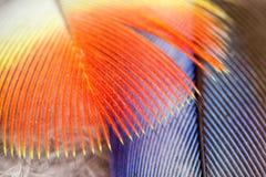 Plumes de perroquet de Rosella images libres de droits