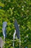 Plumes en métal Photo libre de droits