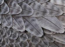 Plumes grises Photos libres de droits