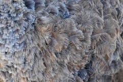 Plumes grises d'autruche - fond, texture images libres de droits