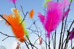 Plumes multicolores avec des branches Photographie stock
