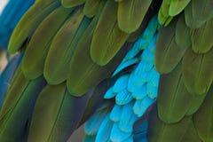 Plumes tropicales de perroquet d'oiseau de fond abstrait Images stock