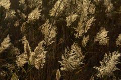 Plumes tubulaires rétro-éclairées, foyer sélectif Photo stock
