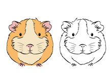 Plump cute colorful guinea pig, sketch vector graphics black and white drawing. Plump cute Guinea pig, sketch vector graphics black and white drawing. Sketches stock illustration