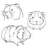 Plump cute Guinea pig, sketch vector graphics black and white drawing stock illustration