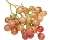 Plump globe grapes (Vitis vinifera) Stock Images
