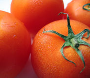 Plump Ripe Tomatoes. Tomato closeup, with beads of condensation on them stock photo