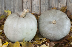 Plumpkins Stock Photo