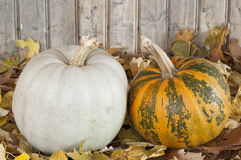 Plumpkins Royalty Free Stock Photo