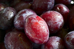 Plums. Fresh and ripe plums with waterdrops Stock Images