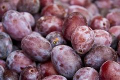 Plums. Closeup of a stack of plums. Water drops on the surface of the fruits. Shallow depth of field Stock Photography