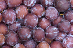 Plums. A sweet ripe plums, background Stock Image
