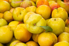 Plums. Bunch of fresh yellow plums from the field Royalty Free Stock Image