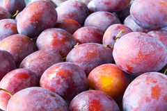 Free Plums Royalty Free Stock Photos - 16139518