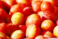 Plums. Red and yellow plums natural background royalty free stock image
