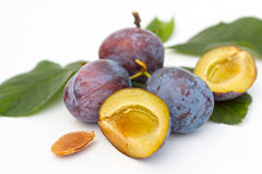 Plums. Fruit plums blue from garden Royalty Free Stock Photo