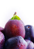 Plums. Stock Photography