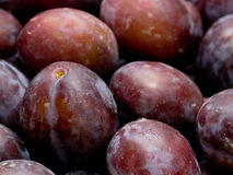 Plums. Closeup of fresh purple plums for background stock images
