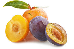 Plums. On the white background Stock Photography