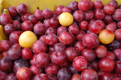 Plums. Ripe summer plums for sale in the outdoor market royalty free stock images