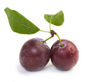 Plums. With water drops on white stock images