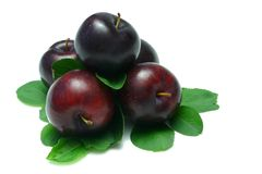 Free Plums Stock Image - 2629841