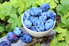 Plums. Healthy fresh organic blue plums Stock Photography