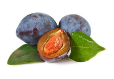 Plums. Stock Images