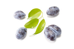 Plums. Some plums with green leaves  on white Stock Photography