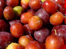 Plums. Tasty sweet plums Stock Image