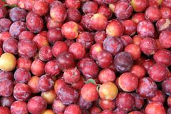 Plums. Pile of fresh juicy red plums stock photos