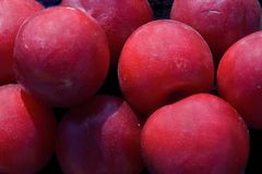 Free Plums Stock Image - 4348631
