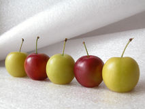 Plums. Line of plums Stock Image