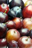 Plums Royalty Free Stock Images