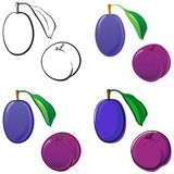 Plums. Fruit set, each in separated layer. Vector illustration, in 4 variations Stock Image
